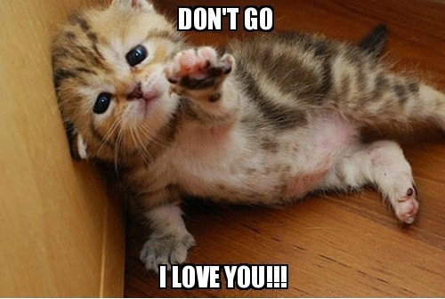 kitten loves you. Why people don't like you- the real reason